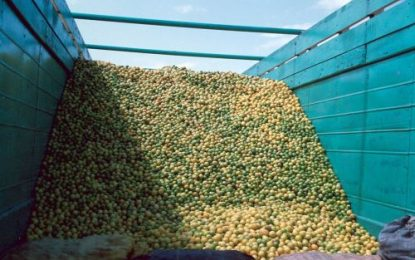 Nutricionista da alternativas ante escasez de limón