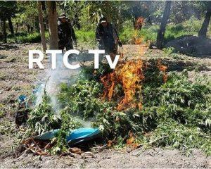 Incineran 9 hectáres de marihuana en el caserío de Yacopampa