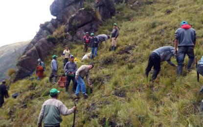 Agricultores siembran más de mil pinos en caserío en La Libertad