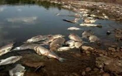 PECES MUERTOS EN CANAL DE REGADÍO
